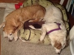 aspen and romeo asleep 3-12