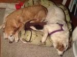 aspen and romeo asleep 3-12